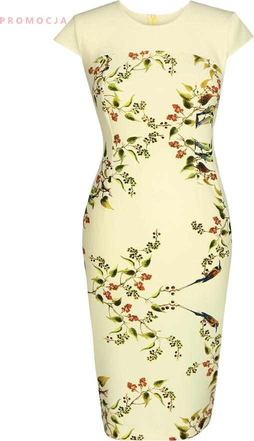 Sukienka Fokus midi dopasowana z okrągłym dekoltem