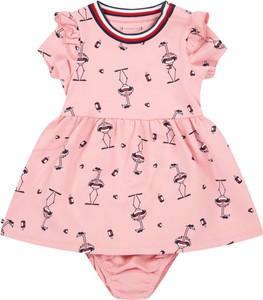 Różowa sukienka dziewczęca Tommy Hilfiger