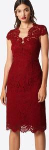Bordowa sukienka Ivy & Oak midi