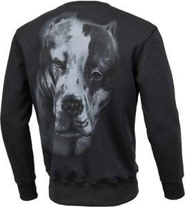 Bluza Pit Bull z nadrukiem w młodzieżowym stylu
