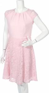 Sukienka Billie & Blossom z okrągłym dekoltem